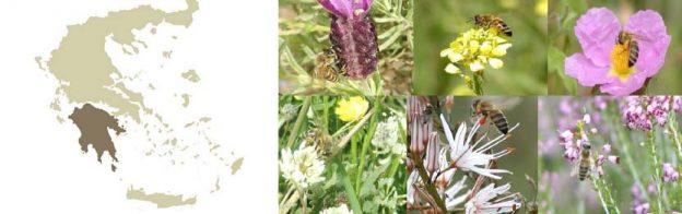Η μελισσοκομική χλωρίδα της Πελοποννήσου