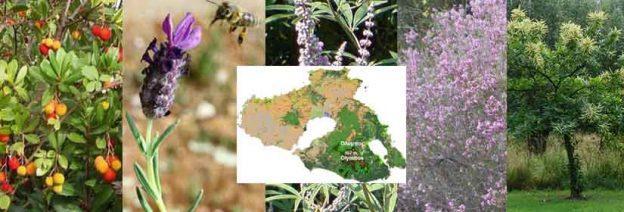 Τα κυριότερα μελισσοκομικά φυτά της Λέσβου και η ανθοφορία τους.