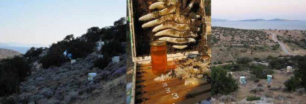 Η μελισσοκομία στη Νάξο